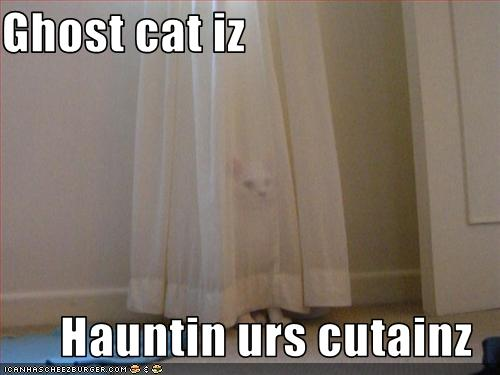 funny-pictures-a-ghost-cat-is-haunting-your-curtains