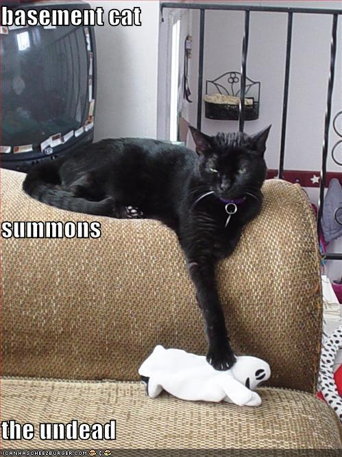 funny-pictures-basement-cat-summons-the-undead