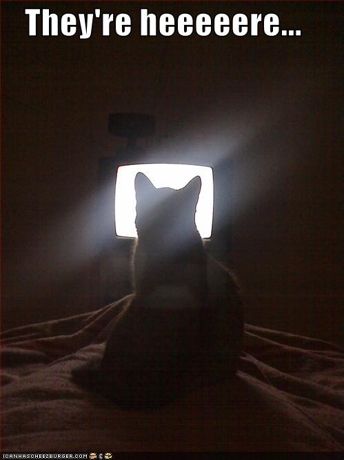 funny-pictures-cat-sees-the-aliens-coming
